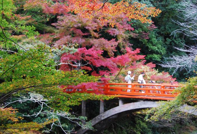 紅葉の清滝川 指月橋: 京都を歩...